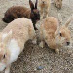 ウサギ1000羽瀬戸内のモフモフ島 8/7土21:00〜21:54 TBS