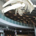 水と鯨で盛り上がる昭島 9月19日(日)テレ東